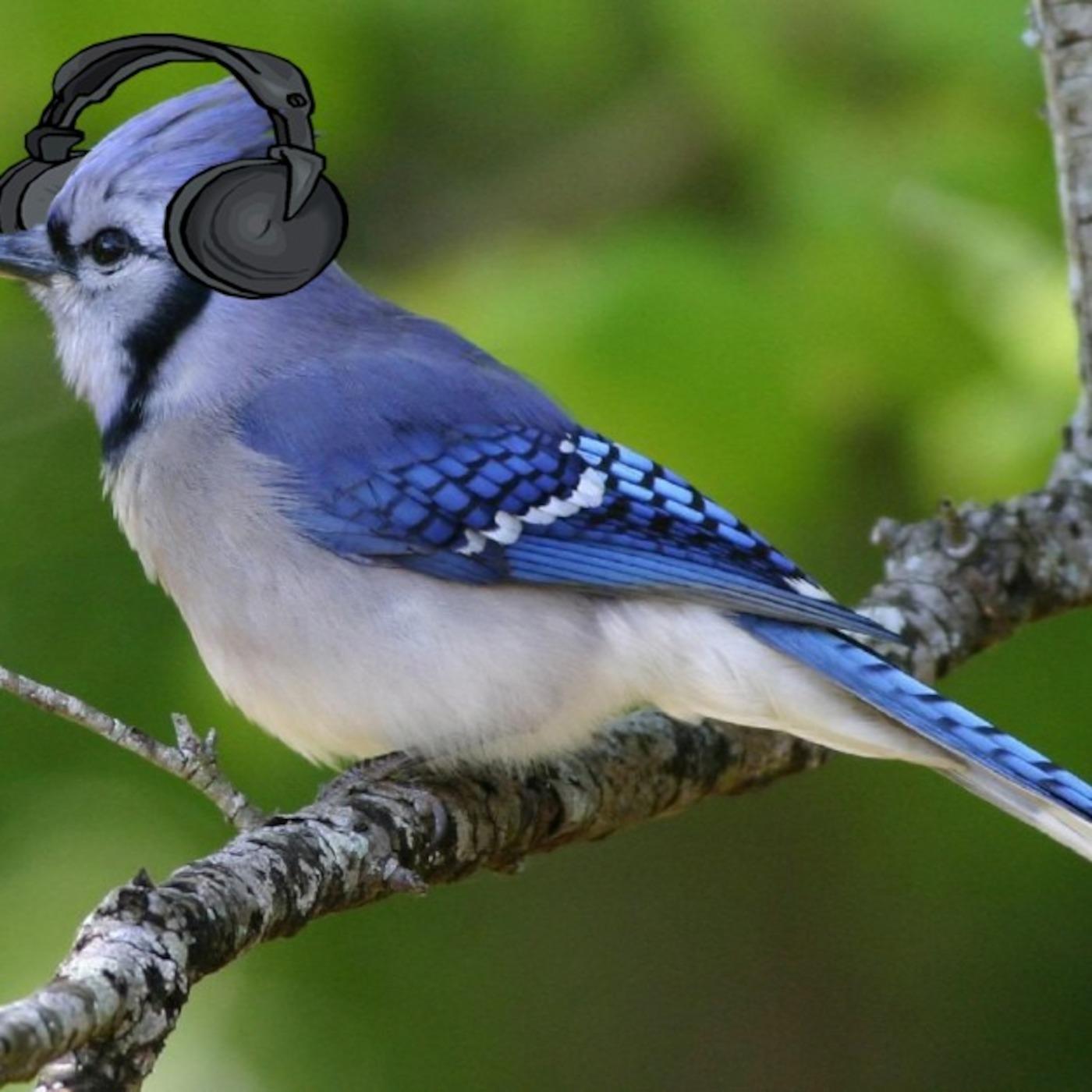 E5 Podcast's Podcast