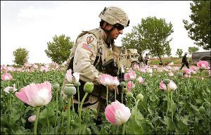 US soldier in opium field, Afghanistan [Photo: ]