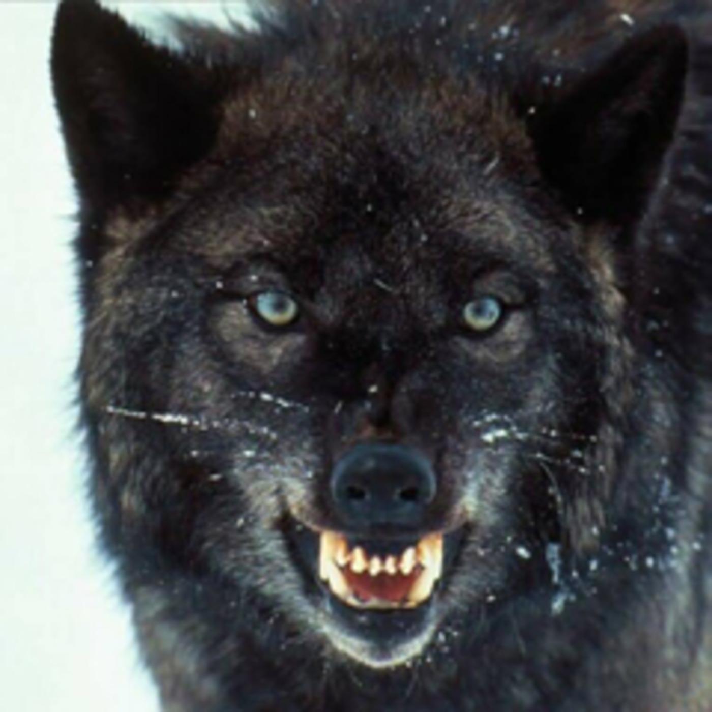 STR1KER's WOLF DEN