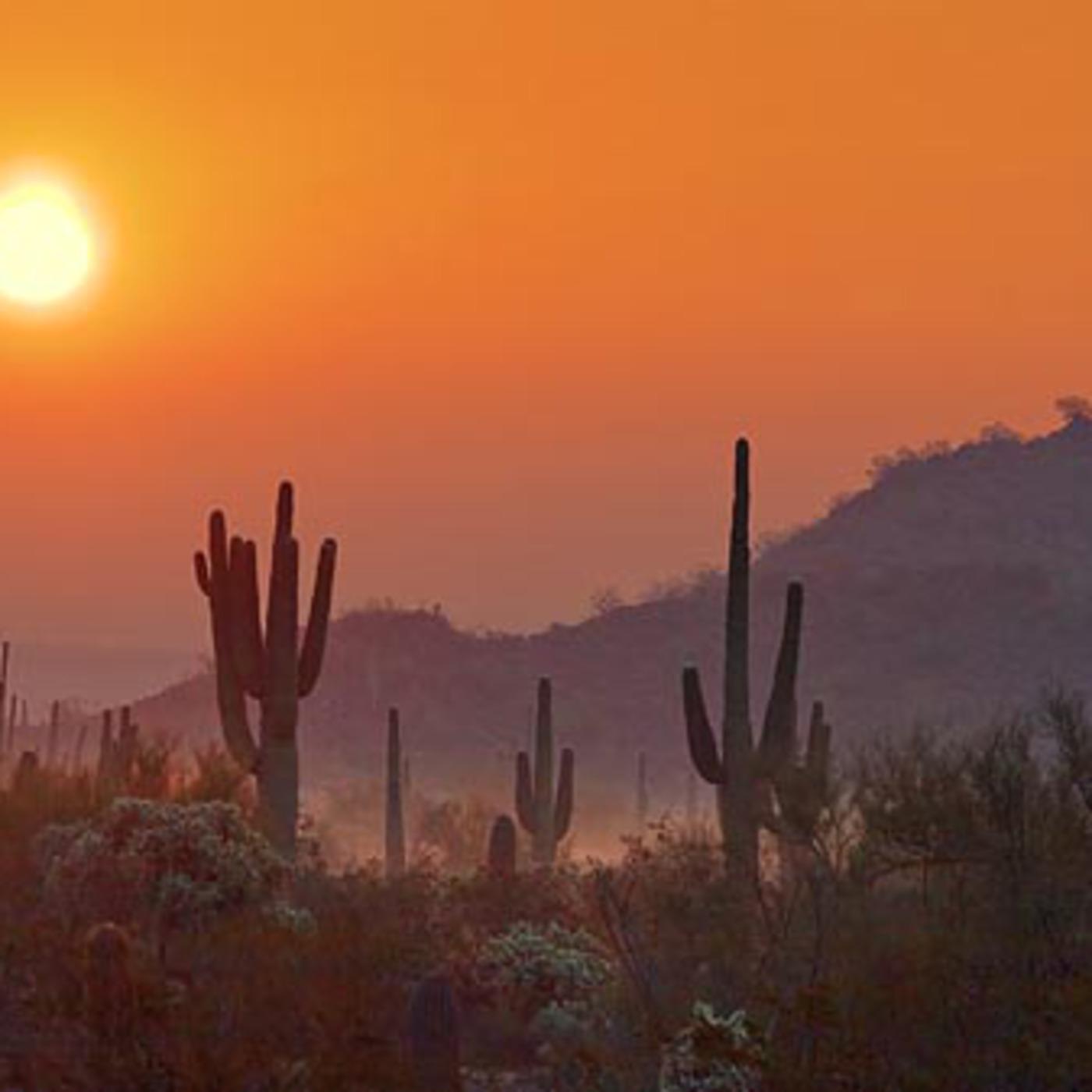 Franck Matthews' Presents:  Desert Winds