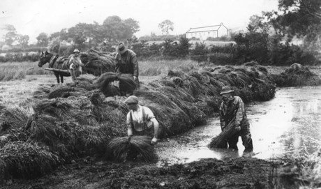 Working in the Flax Hole, Co. Down  [Photo:  ]