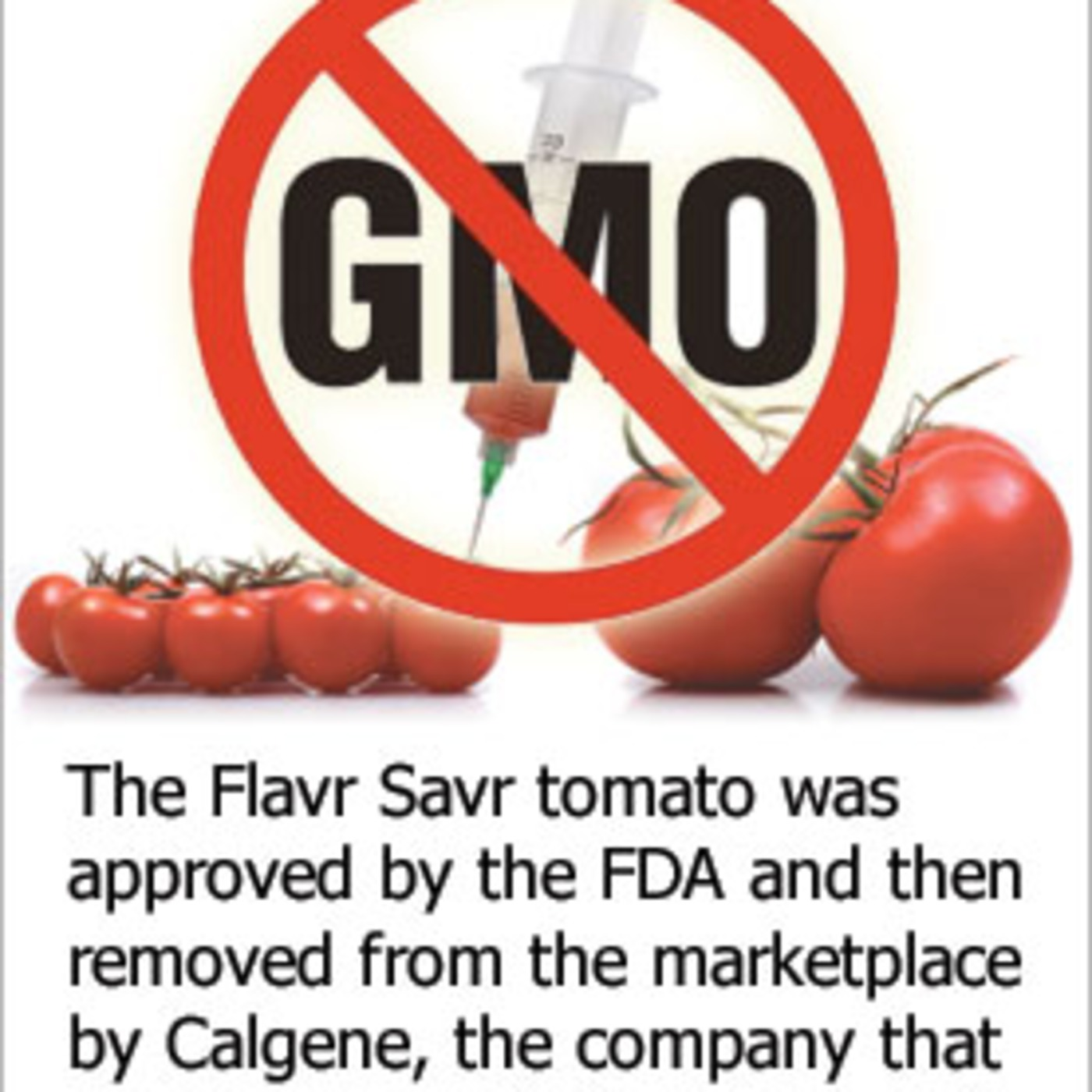 argumentative essay on genetically modified foods