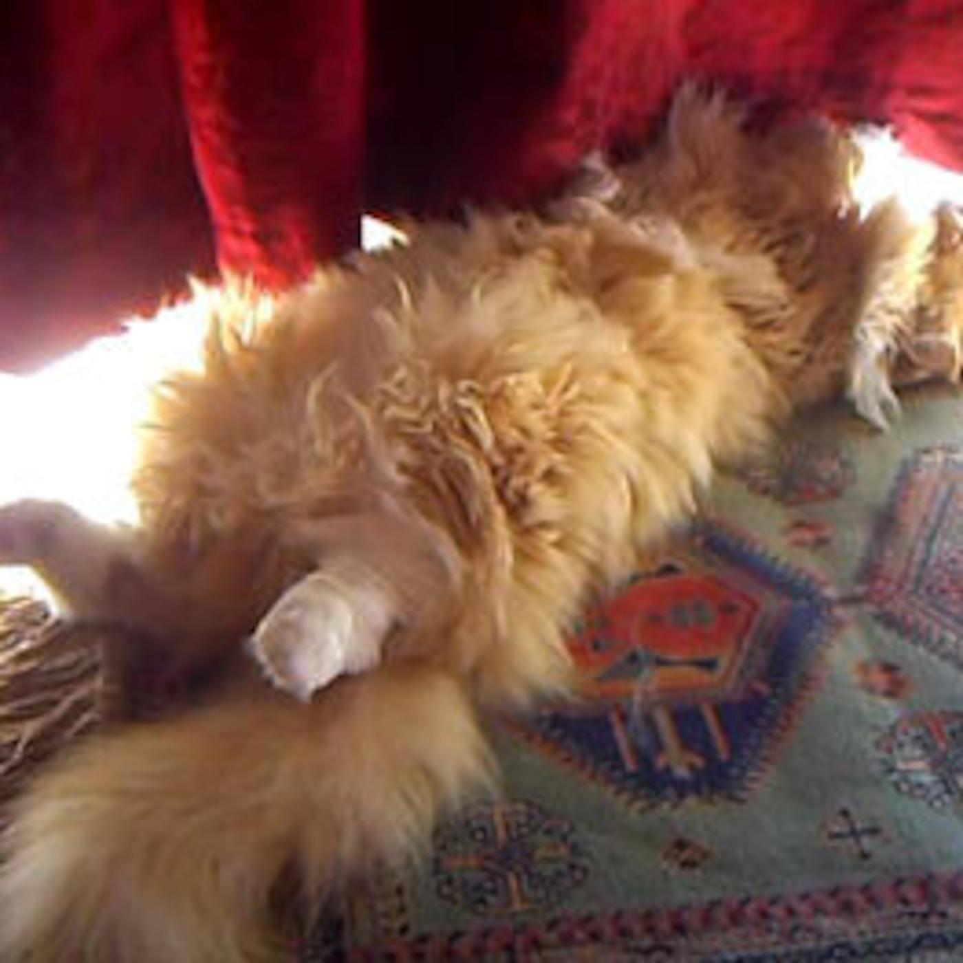 VidCast #24 - Simba's Early Morning Sunbathing Kitty Cat