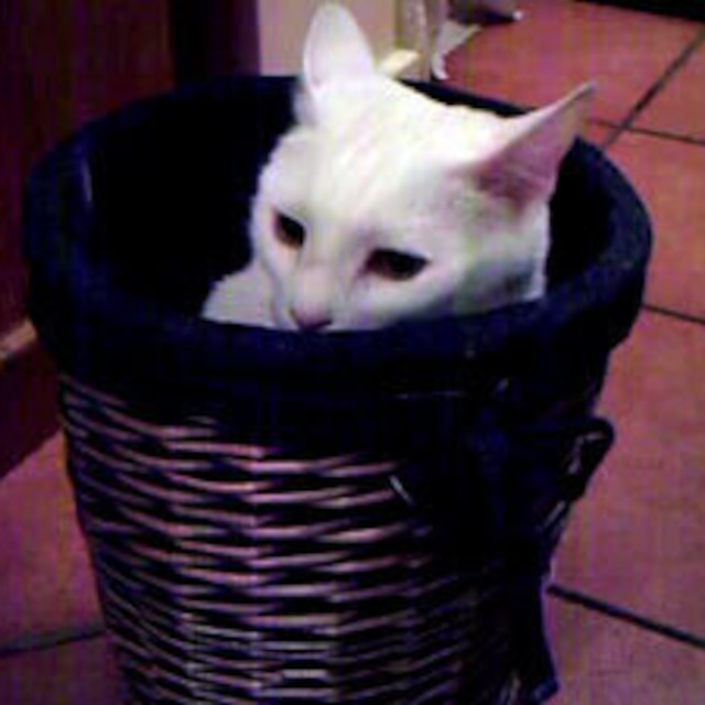 VidCast #23 - Persia Stuck in a Basket!