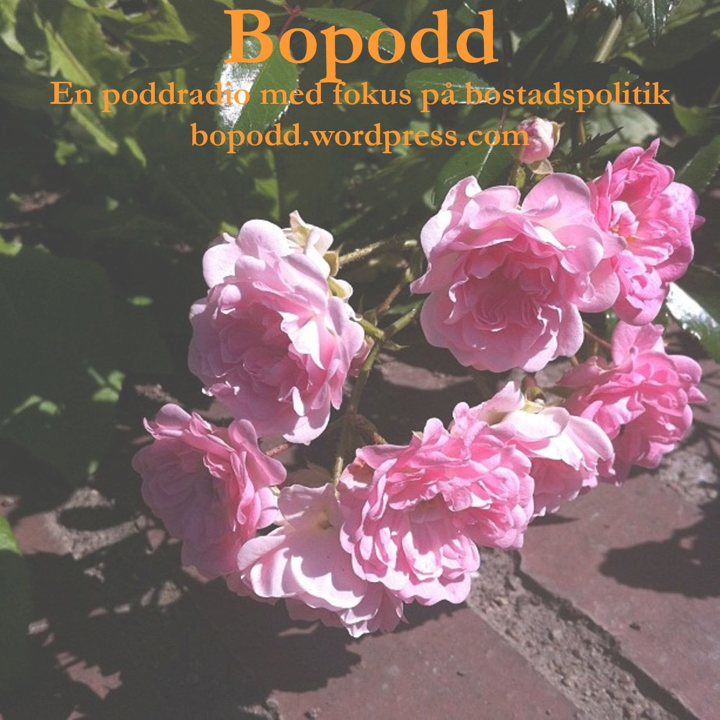 BoPodd
