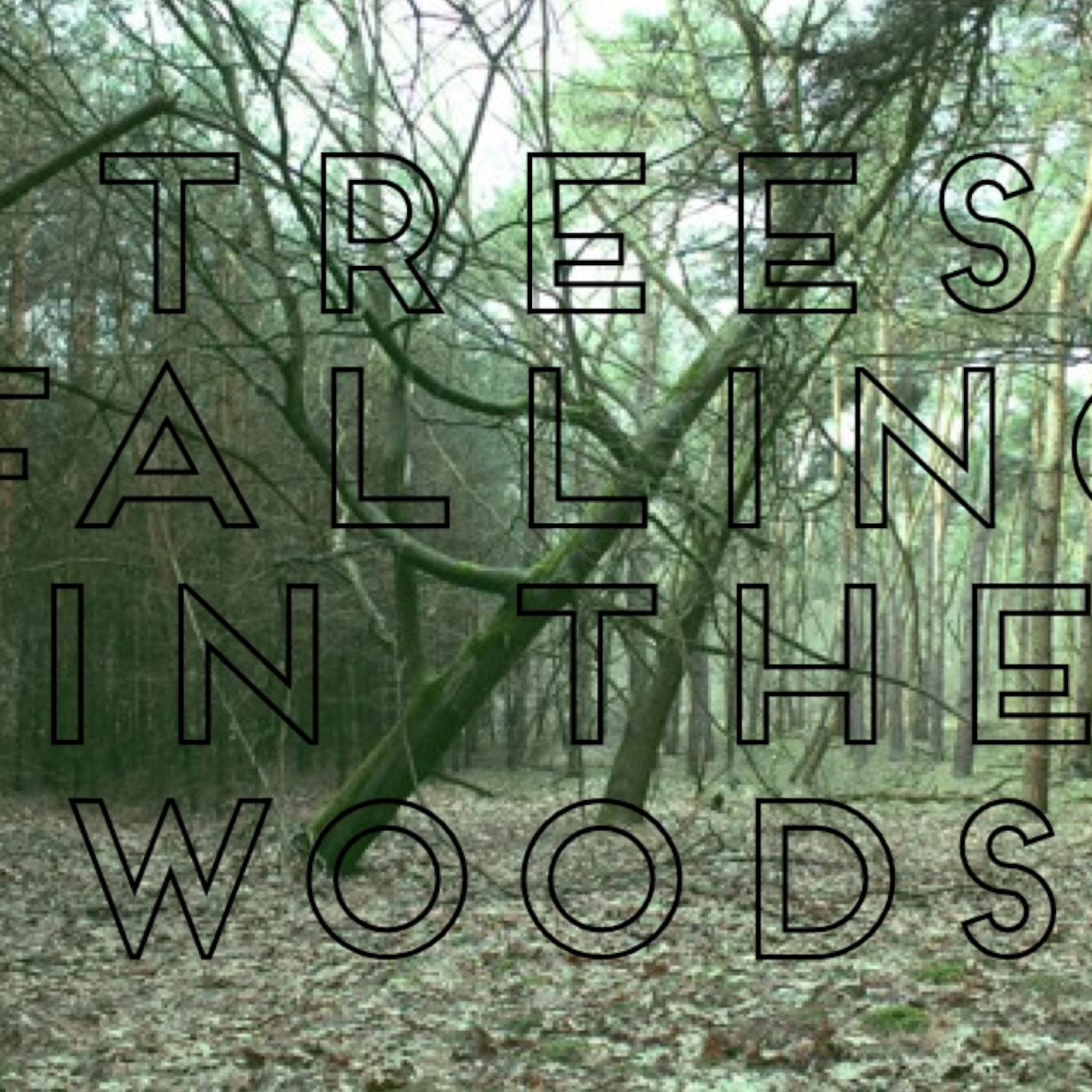 Trees Falling in the Woods Podcast