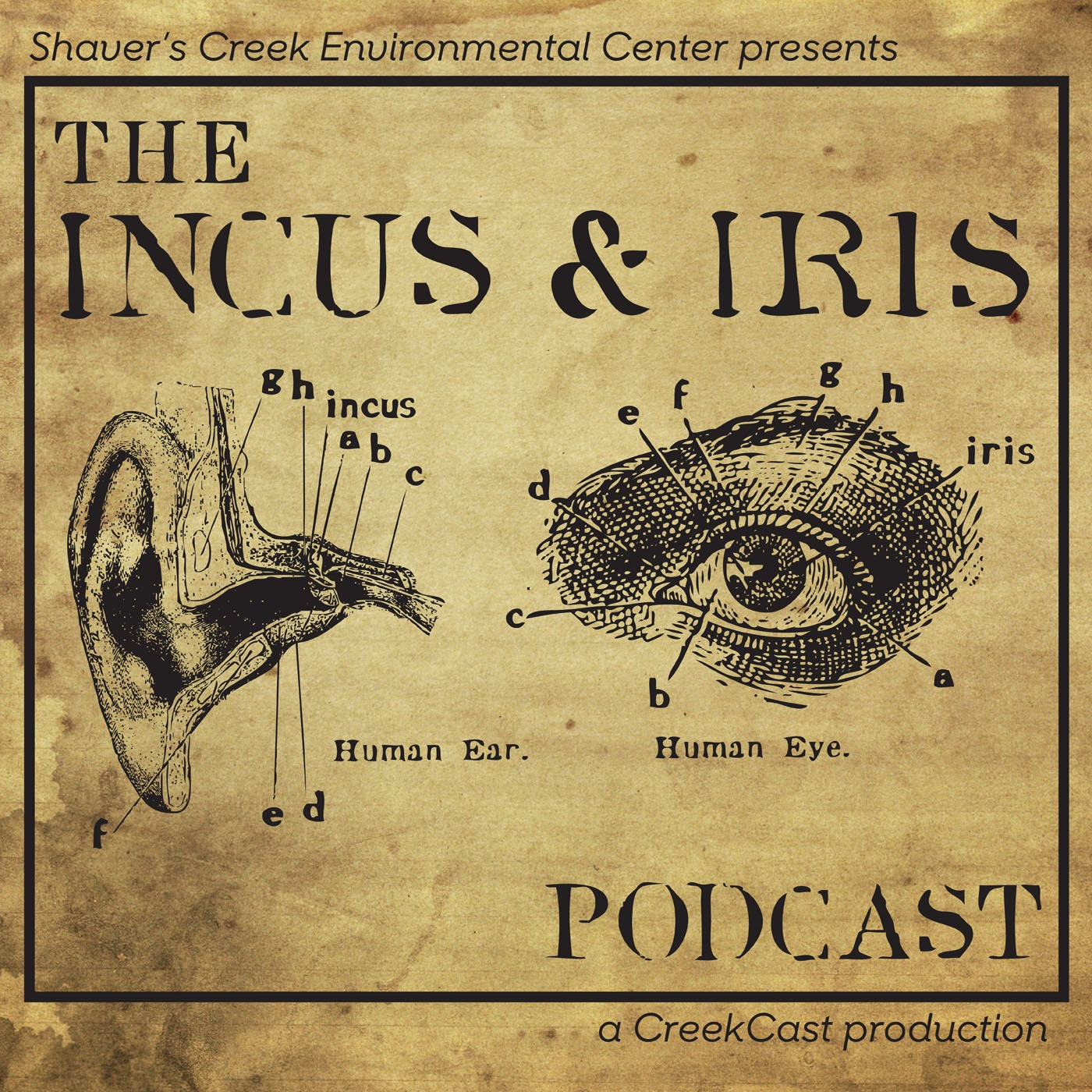 Shaver's Creek Incus & Iris Podcast