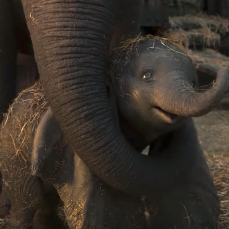 Dumbo 2019 Full Movie Download Online