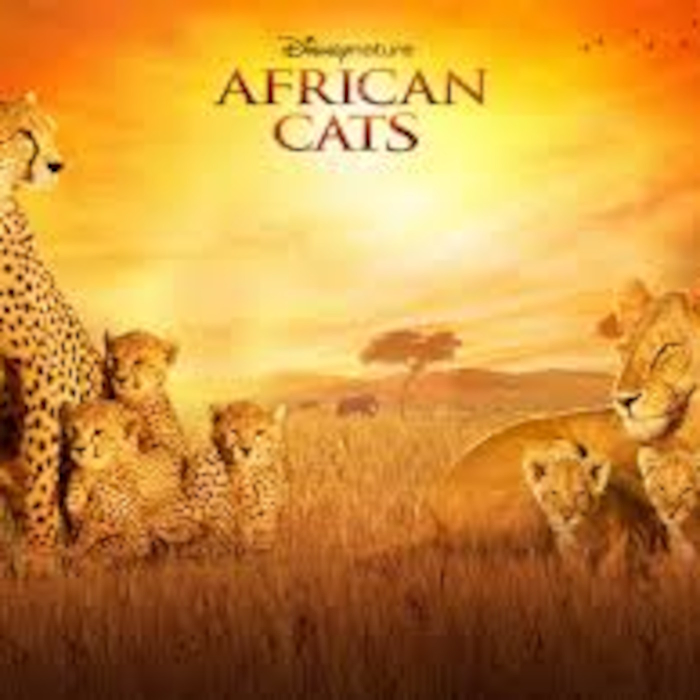 Bunny Lewis' African Cats Podcast